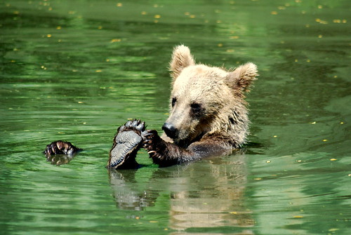 Bear Cub Bath Time