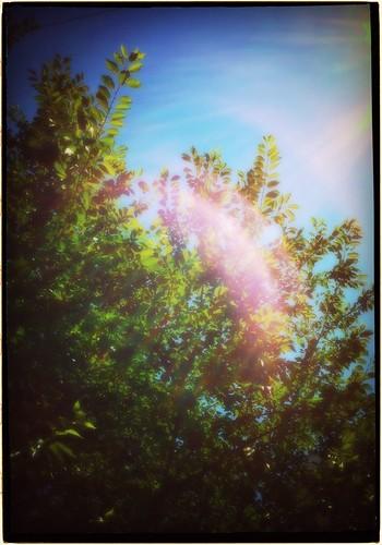 Summer by keganimushi