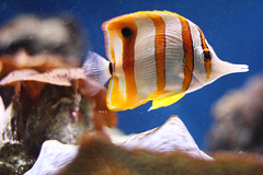 Under the Sea (Mia ) Tags: life uk sea orange white fish london water animal canon 50mm zoo under 7d aquatic khalid manal