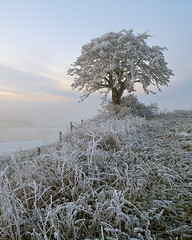 Hilltop Hoar Frost (antonyspencer) Tags: uk winter tree ice landscape frozen frost hoarfrost dorset hilltop lonetree