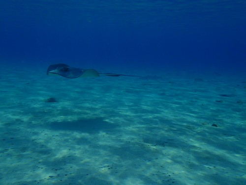 snorkeling bimini vacationing miamiboating biminiboating
