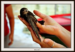 mani (erman_53fotoclik) Tags: bird wings hands arm finger mani ring ali oxygen figure swallow dita braccio uccello figura anello rondine ossigeno mygearandme ringexcellence flickrstruereflection1 flickrstruereflection2