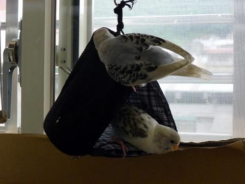 利用口罩自製鳥帳篷