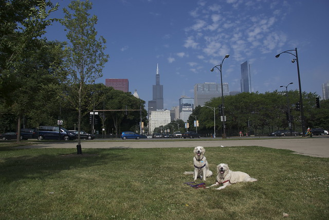 Daily We Still Call It The SEARS Tower Dogs 19 July 2011