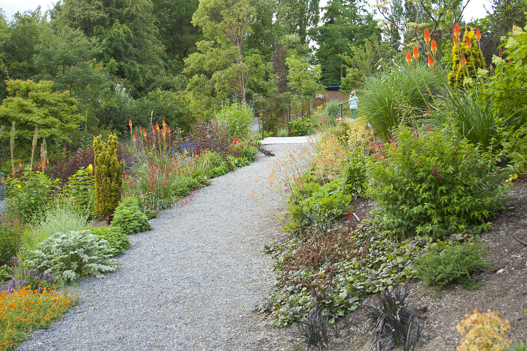 path with kniphofia