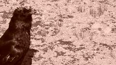 2011-07-15 - 171420 (shitbrain) Tags: yellowstonepark