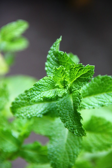 Fresh Mint from my garden
