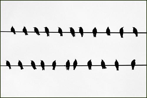 Bird Song!