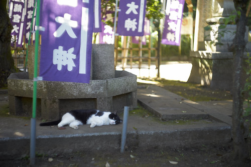 at Wadatsunomiya