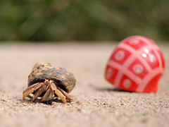 """Mr. Krabbs Hanging Out With His New """"Roommate"""" (btn1131 theromanroad.org) Tags: shells hermitcrabs animals pen olympus crabs zuiko 40150mm epl1 mygearandme"""