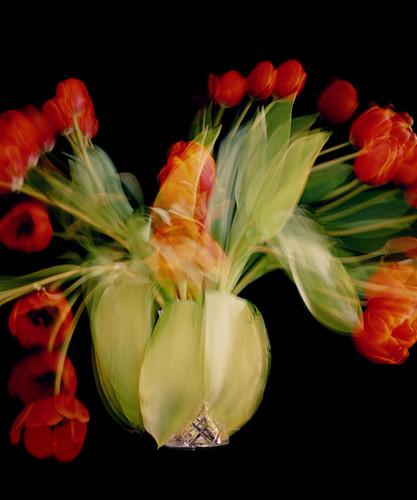 Chris-Spackman-tulips