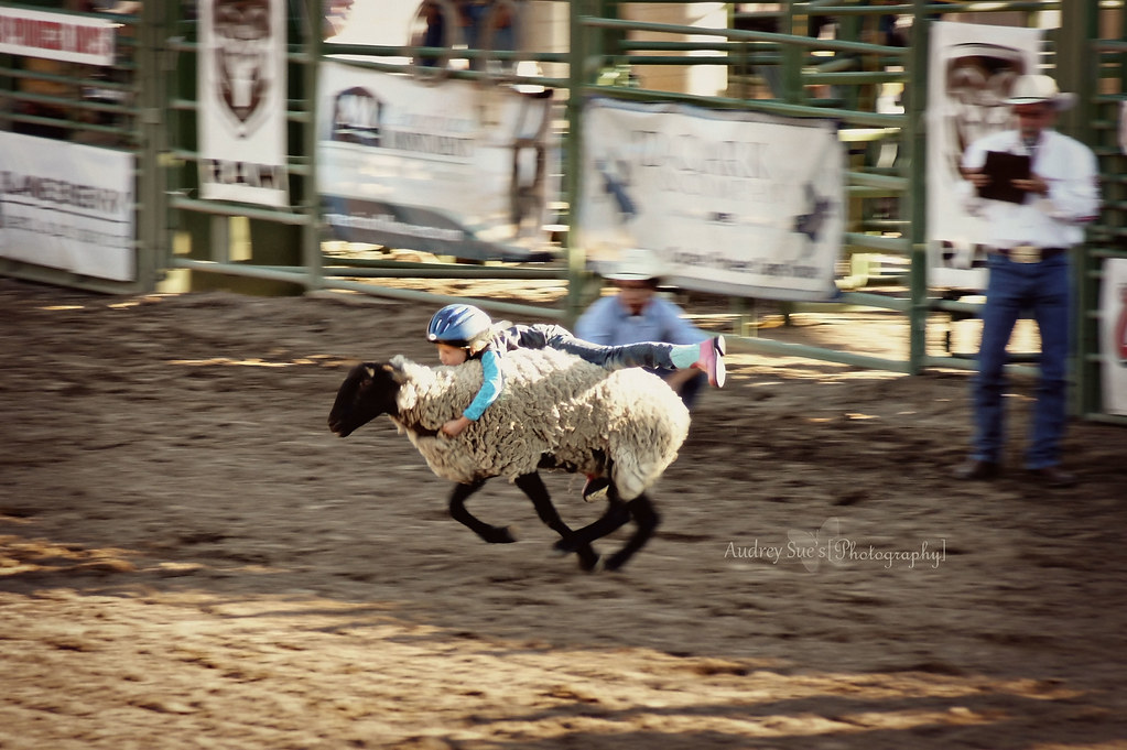 2011rodeo4