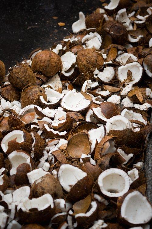 Coconuts / Noix de coco