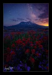 Life in a Museum (Ryan Dyar) Tags: mountain night stars volcano washington northwest wildflowers eruption mtsthelens milkyway mountsainthelens ryandyar