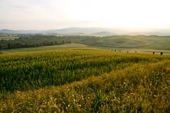 Photographers at sunrise (Karmen Smolnikar) Tags: light italy sunrise photographers tuscany shooting toscana valdorcia oats