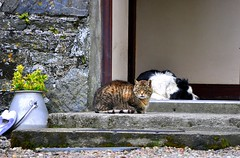 Peaceful (SpitMcGee) Tags: dog cat island scotland eingang entrance peaceful insel hund katze lismore friedlich milkchurn milchkanne bej