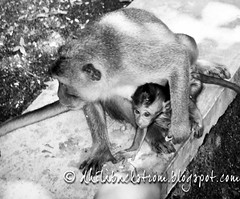 Indonesia_2011-66.jpg