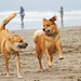Romping on the Beach