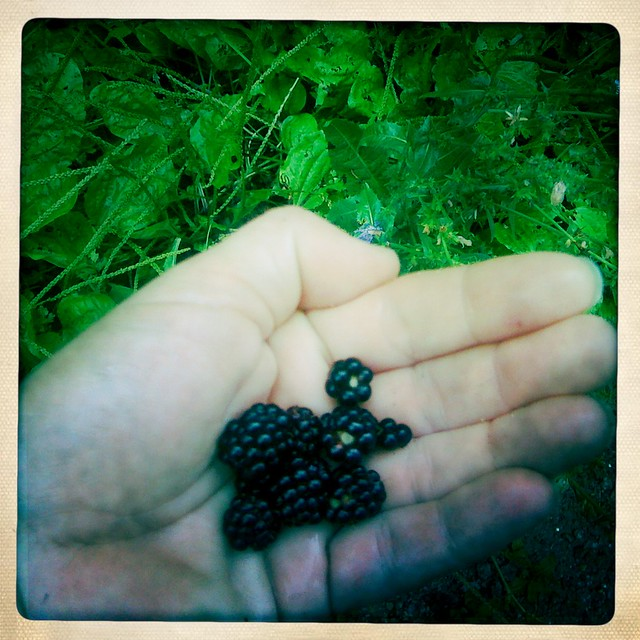 i stop for berries
