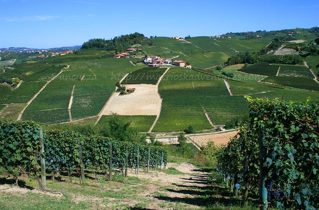 vista vigne delle langhe Piemonte