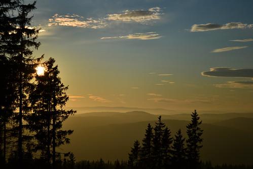 Norsk skog