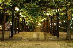 Kungsträdgården 2 (AdurianJ) Tags: pictures night canon evening europa europe sweden stockholm dusk nordic scandinavia suecia manfrotto lenses 欧洲 スウェーデン ヨーロッパ nórdico escandinavia 瑞典 北欧 斯堪的纳维亚 canon7d manfrotto055cxpro4 498rc2 ノルディック