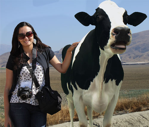 Leche, California Milk Advisory Board, cows, vacas