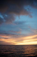 (Cameron Trautman) Tags: ocean blue sunset sun orchid flower tree beach america island hawaii big united down palm resort rays states hilo mauna lani kona fairmont the of