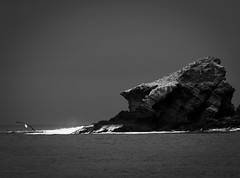 where heart belongs (Minghua Nie) Tags: ocean sea bw white black bird nature rock landscape island freedom fly fishing power heart earth seagull free end land belongs nie minghua onthewings