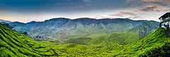 Cameron Valley Tea Plantation (Jim Boud) Tags: travel trees mountains beauty clouds lens landscape is asia southeastasia dramatic tranquility wideangle highland malaysia tropical vegetation usm lush tanahrata cameronhighlands efs tranquil bharat teaplantation lightroom artisticphotography superwideangle teaplants teagardens ringlet asiapacific cameronvalley jimboud 1585mm canoneos60d jamesboud cameronvalleyteaplantation canonefs1585mmf3556