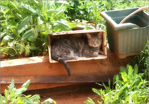 gardenmush