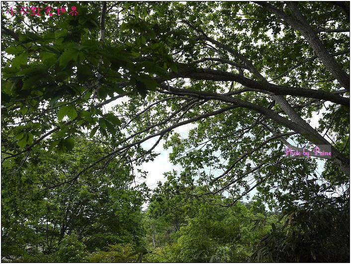 玉川溫泉大噴湯岩盤浴-30.jpg