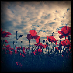 {explored} [iPhone] Poppies! Again! (taytomFFM) Tags: sky nature clouds quality group vision poppies iphone tejas iphone4 visionqualitygroup visionquality100 hipstamatic