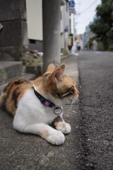 cat in the evening #01 (akira*) Tags: street summer animal japan digital pen cat tokyo olympus panasonic ep1 2011 14mm shinkoiwa lumixg14mm25asph
