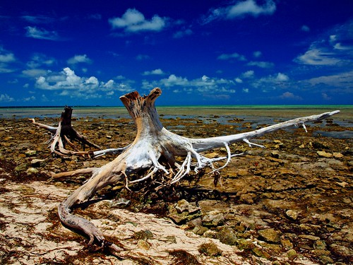 Stumped: Ohio Key, Florida Keys National Wildlife Refuge