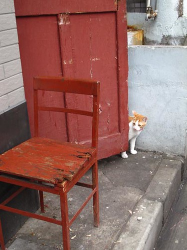 Shanghai kitty