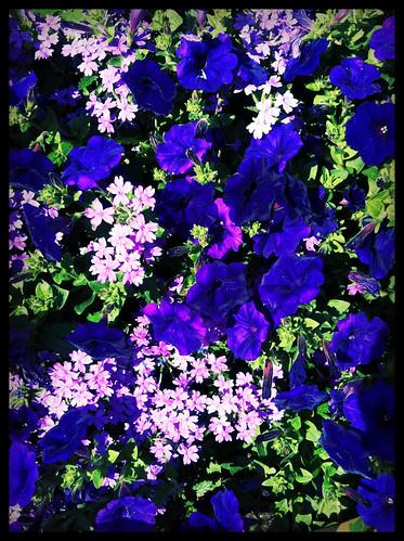 Fields of Glory by analaskanmom