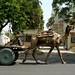 Carros de camelo