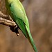 Aves coloridas
