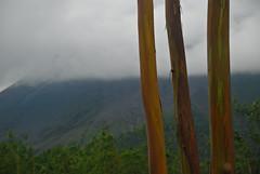 Rainbow Trees (Brian Sloane) Tags: trees volcano rainbow costarica arenalvolcano rainbowtree
