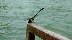 A dragonfly lands on the raft (TrekSnappy) Tags: china liriver guangxi xingping yangdi liriverrafting