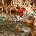 O colorido dos corais