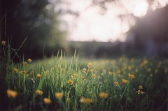 Dreamy (Ludovic Macioszczyk Photography) Tags: dreamy canon ae1 135 fuji 1600 iso countryside sweet shine light country plant woods bois summer france ludovic macioszczyk analog photography film pellicule no flash fd 50mm 18 vintage camera photo photographie argentique trees keep alive ludos photographs dof 2009 35mm natural spring life shoot art limousin holidays vacances colors color landscape nature 87 sunny champs bokeh sun picture world photographe flower fleurs flowers exposure négatif développement scan appareil lumière vie © tag monde