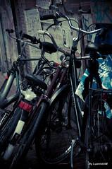 Amsterd (* Luannie *) Tags: cidade pessoas europa prediosantigos amsterda