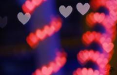 الحب () (عفاف المعيوف) Tags: قلب حب أحمر بوكيه