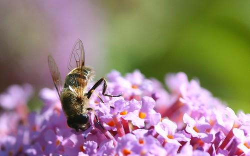 Bee too