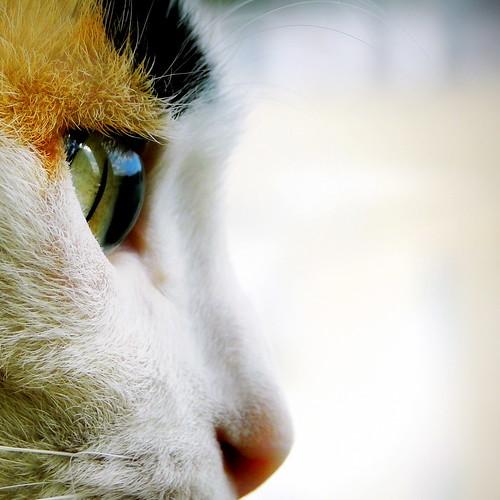El mundo a través de sus ojos | The world through her eyes