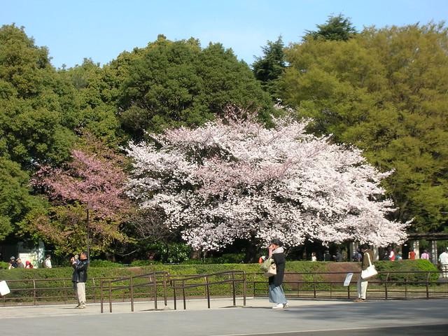 d7-01-ueno-park