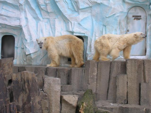 d7-04-ueno-park-zoo