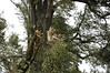 Heitern3112 (hamschtr) Tags: bäume sturmschaden zofingen heitere heitern heiternplatz